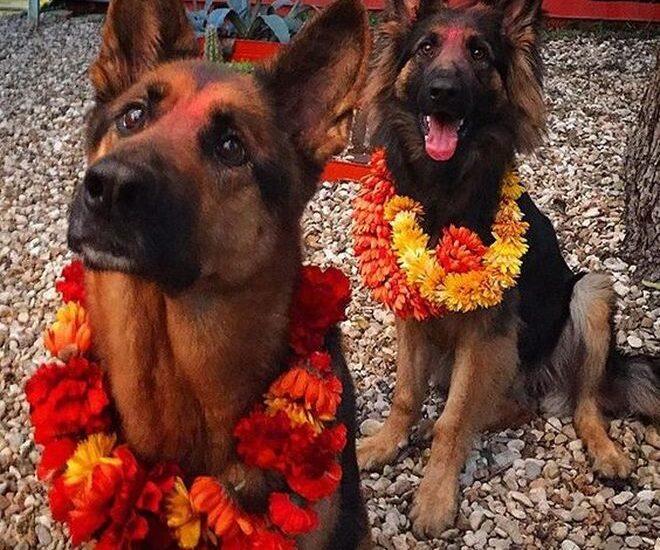 vi. il blog di vinicio mascarello festa cani nepal kukur tihar costume tendenze