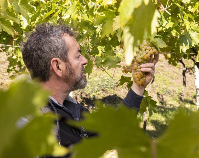 tenuta ballast vinicio mascarello vino gambelalra il blog di vinicio